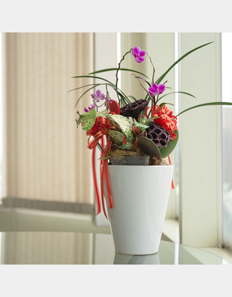Orchid Planting and planting landscaping